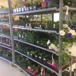 Kenosee Plants